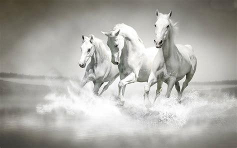 horses animals hd horse fanpop wallpapers pc running