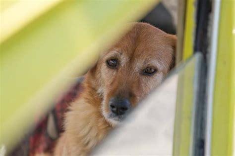 hundetransport im auto hundetransport im auto socko