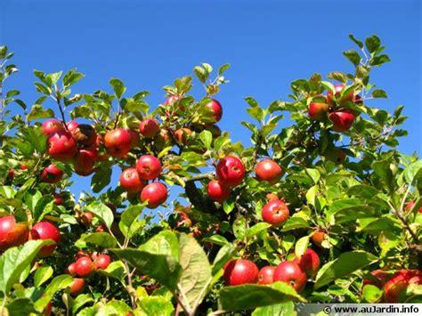 cuisiner des gateaux l 39 éclaircissage des arbres fruitiers