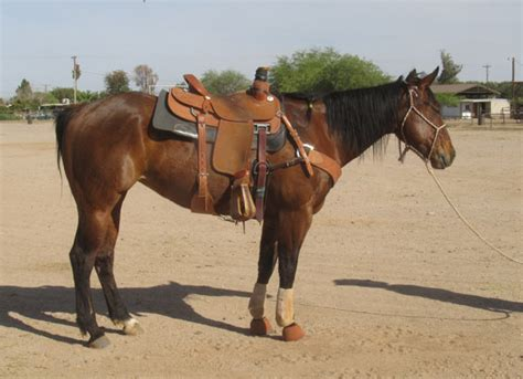 horse tiger bay mare head roping george