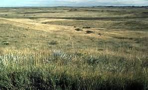 Tropical Grasslands - ...