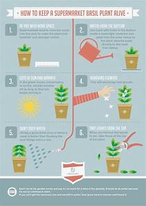 infographic about how to take care of a basil plant alive With how to take care of a garden