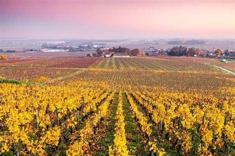 beaune   burgundy wine region  france