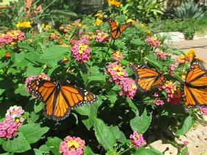 Butterfly garden on grounds is pleasant colorful retreat for Phoenix butterfly garden