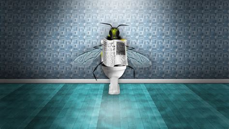 fly in the toilet flies in the toilet reading the newspaper wallpaper 1920x1080 hd resolution wallpaper