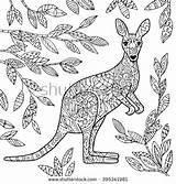 Coloring Kangaroo Adult Wallaby Vector Animal Shutterstock Illustration Australian Royalty Colouring Adults Animals Macropodidae Vectors Mandalas Designlooter Mindfulness Colorear Kangaroos sketch template