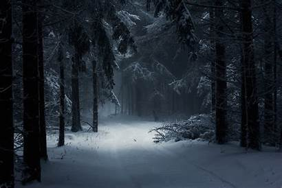 Dark Winter Forest Android Chq Wallpapers Desktop