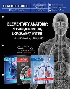 Elementary Anatomy  Nervous  Respiratory  And Circulatory