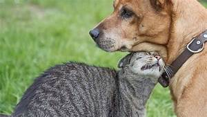 Dogs Are Smarter Than Cats  Study Finds