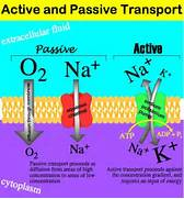 Passive Transport   ed...