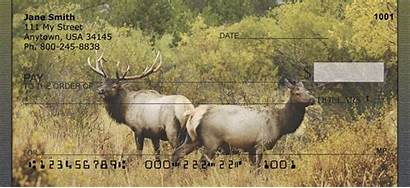 Elk Rocky Mountain Checks Personal Fall