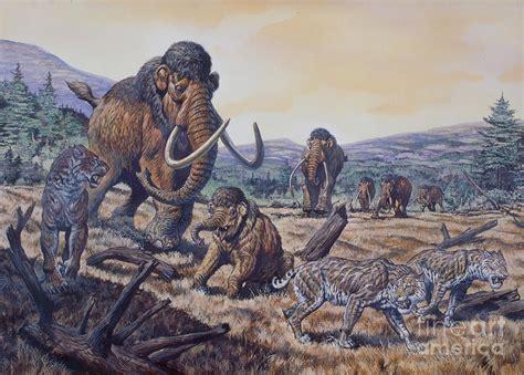 herd  woolly mammoth  scimitar digital art  mark