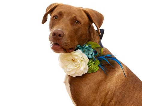 Wedding Accessories For Dogs : 20 Dapper Wedding Accessories For Your Dog
