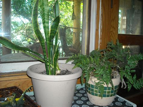 Best Indoor Window Plants by The Best Indoor Plants For East Facing Windows Garden