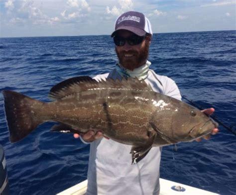 grouper fishing summer tactics surefire better tips ellis capt charlie