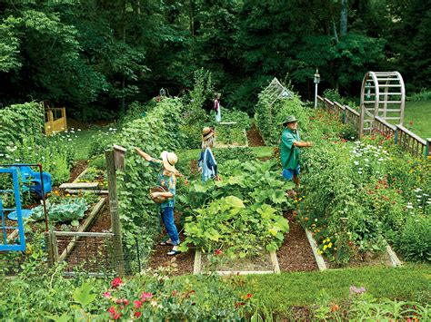 kitchen collection magazine these secrets for growing your own veggie patch