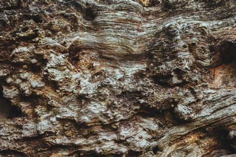 stock photo  bark english oak french oak