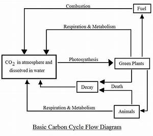 Diagrams  Oxygen Cycle