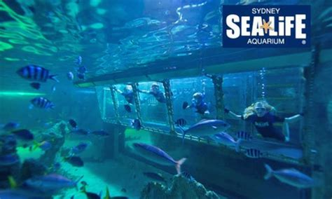 sea life sydney aquarium  darling harbour groupon