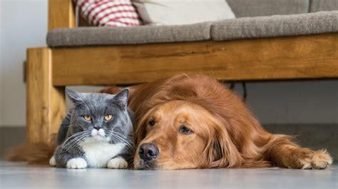 katzen und hunde gemeinsam halten  gelingt es