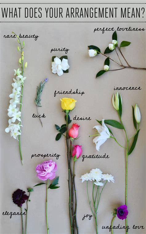 flower arrangements meaning explore the secret language of flowers lauren conrad