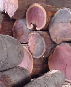 Purple Heart Wood Tree, woodworking cutting software