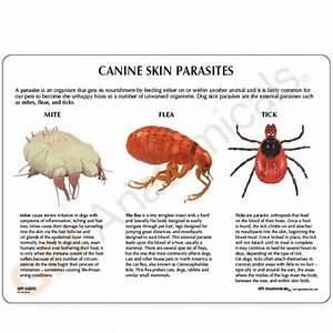 product canine skin parasites model