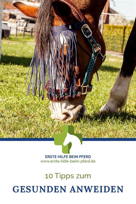 Durchfall Pferd Weide