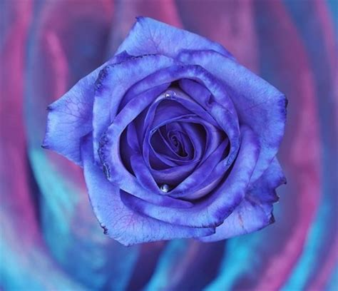 750x1334 beautiful 3d flower cg beautiful blue 3d and cg abstract background