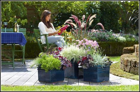 Winterharte Kübelpflanzen Für Terrasse