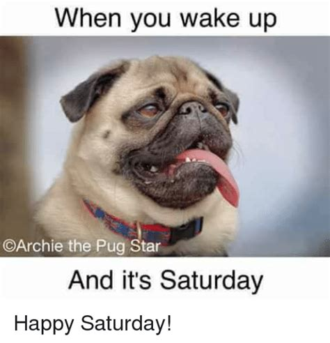 It S Saturday Meme - when you wake up archie the pug star and it s saturday happy saturday meme on sizzle