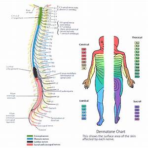 Reflexology Hip Ache Alleviation  U2013 Why Hip Flexor Blogs
