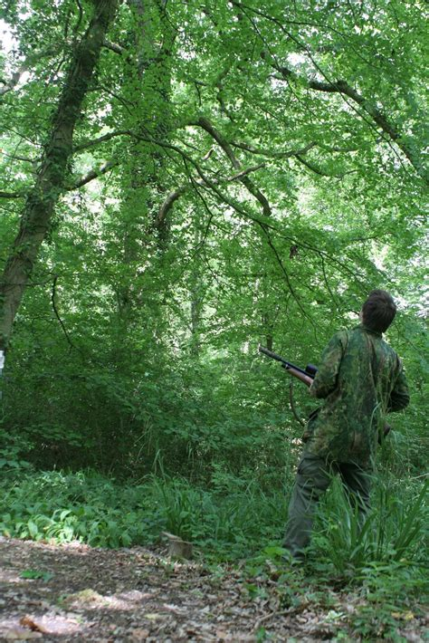 mat mannings air rifle hunting sit tight  summer woods
