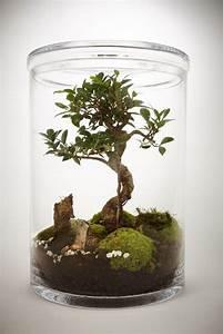 Pflanzen Terrarium Einrichten : pin von luis emilio moreno galvis auf jardiner a bonsai ficus pflanzen und gartenterrarium ~ Watch28wear.com Haus und Dekorationen