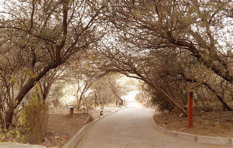 Botanischer Garten Windhoek oase in windhoek der nationale botanische garten