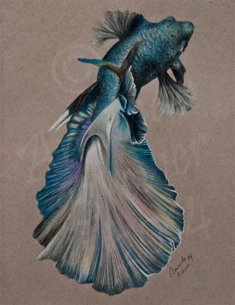 original colored pencil drawing  toned paper blue betta