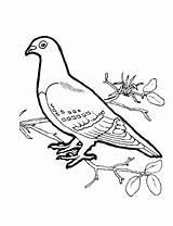 Coloring Dove Jason Voorhees Getcolorings Printable Mourning Bird sketch template