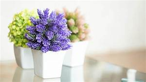 Indoors plants and flowers, easy houseplants easy to care ...