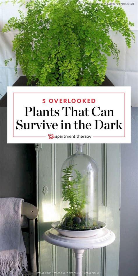 dark green bathrooms ideas  pinterest forest
