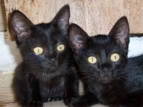 black cats for beautiful black cats photos