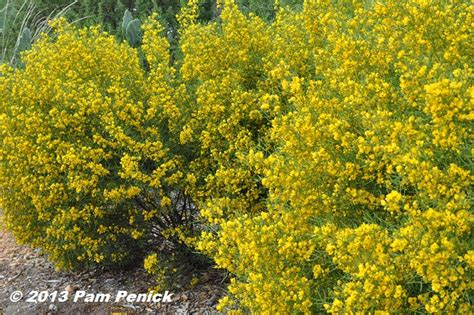 Flowering Shrubs with Yellow Flowers
