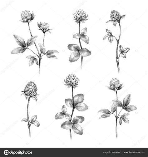 disegni di fiori a matita fiori disegni a matita portalebambini