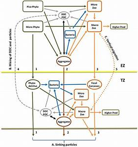 The Exports Wiring Diagram Illustrating The C Flows From