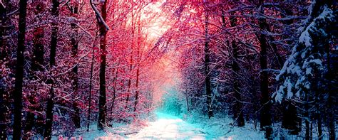 Gorgeous Backgrounds Winter Snow Forest Trees Background Forest Gorgeous