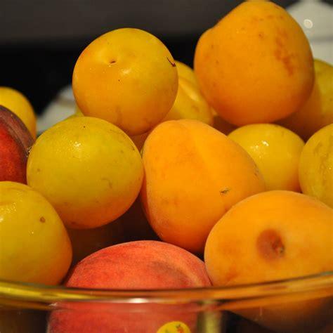 Apricot Peach Plum Crisp - Sheena LaShay