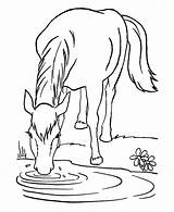 Horse Coloring Pages Odd Dr Horses Sheets Printable Animal Farm sketch template