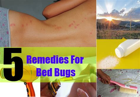 Bed Cure by Home Remedies For Bed Bugs Treatments Cure For