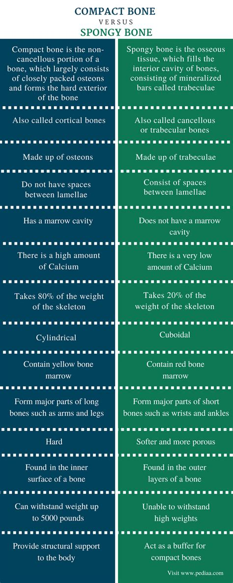 Difference Between Compact And Spongy Bone Definition