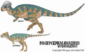 Pachycephalosaurus Facts | Dinosaurs Pictures and Facts