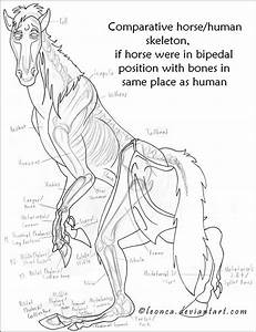 31 Best Horse Anatomy Images On Pinterest